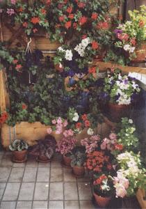 阳台,花是最可爱的朋友。