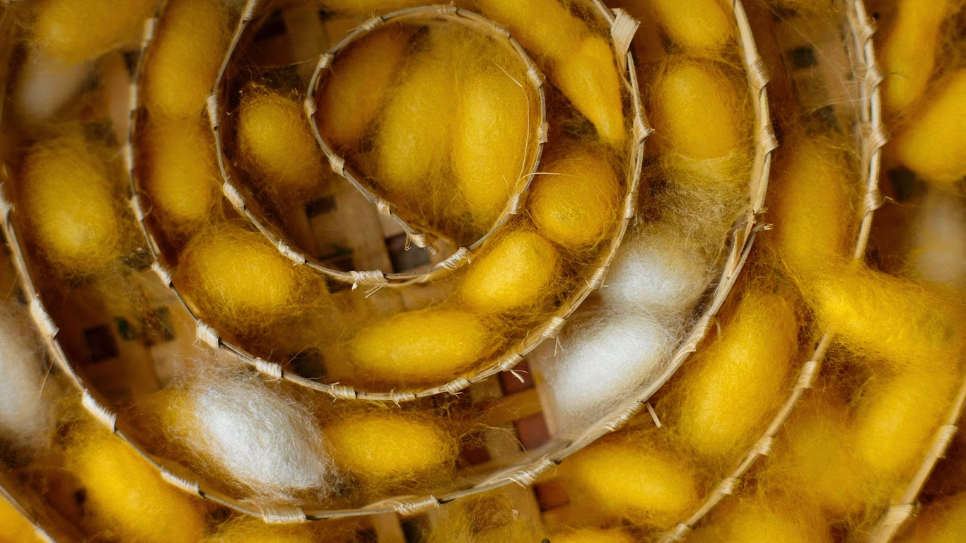 Silkworm cocoons at a weaving center in Luang Prabang, Laos (© David Noton Photography/Alamy) 47