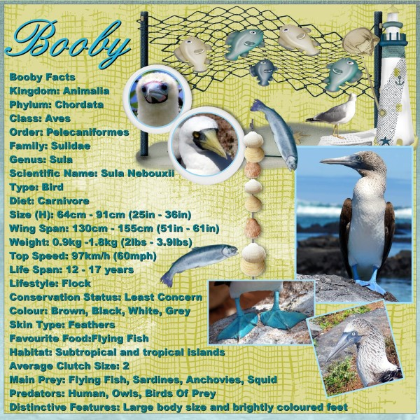 Feb.2016 - Booby facts