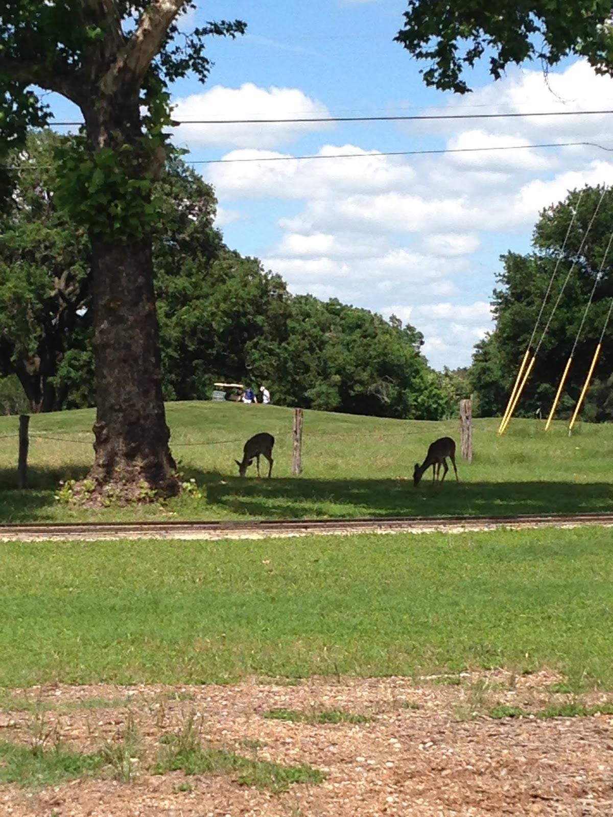 Austin Summer Fun Landa Park New Braunfels Tx