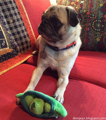 Liam with his pea toy from BarkBox