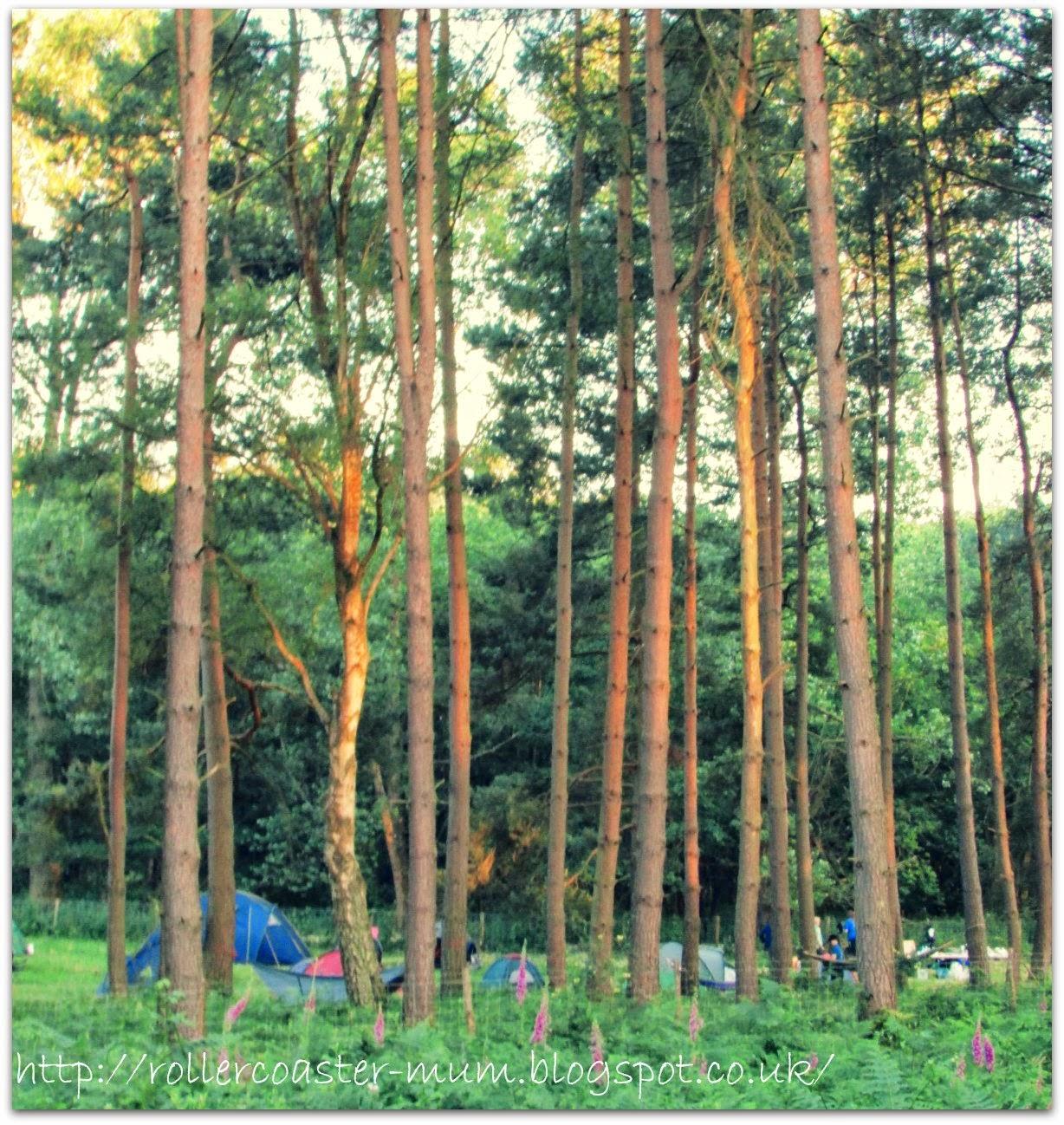 #BigWildSleepout camp Farnham Heath