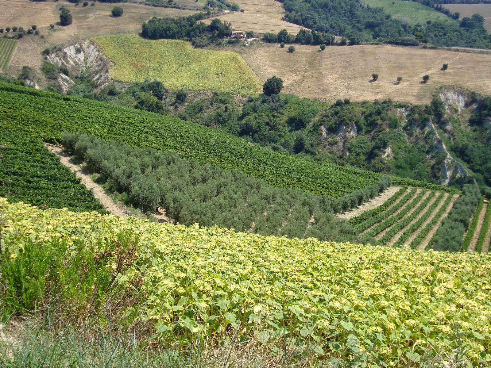 Le Marche Wine Country