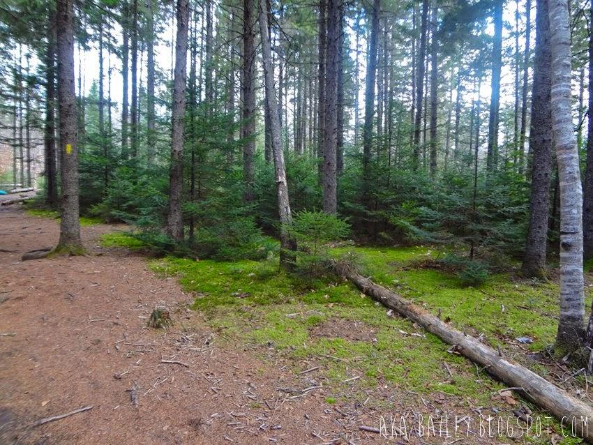 Hiking near Cardigan Mountain in New Hampshire
