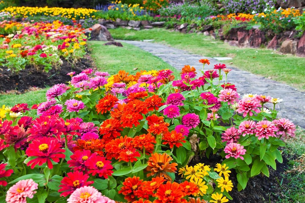 Low maintenance perennials for your garden myfoodforu for Low maintenance full sun perennials