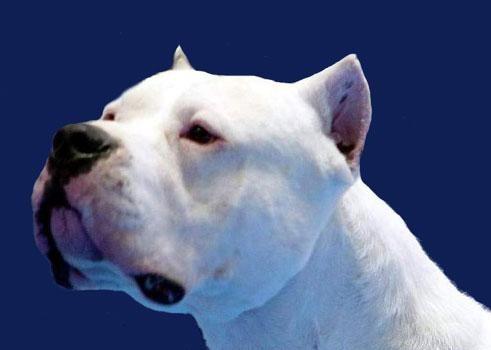 video perros peligrosos: