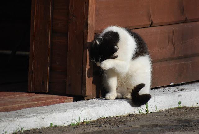 Кот стесняется