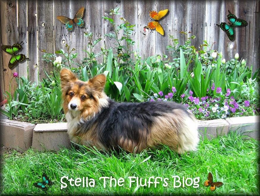Stella The Fluff