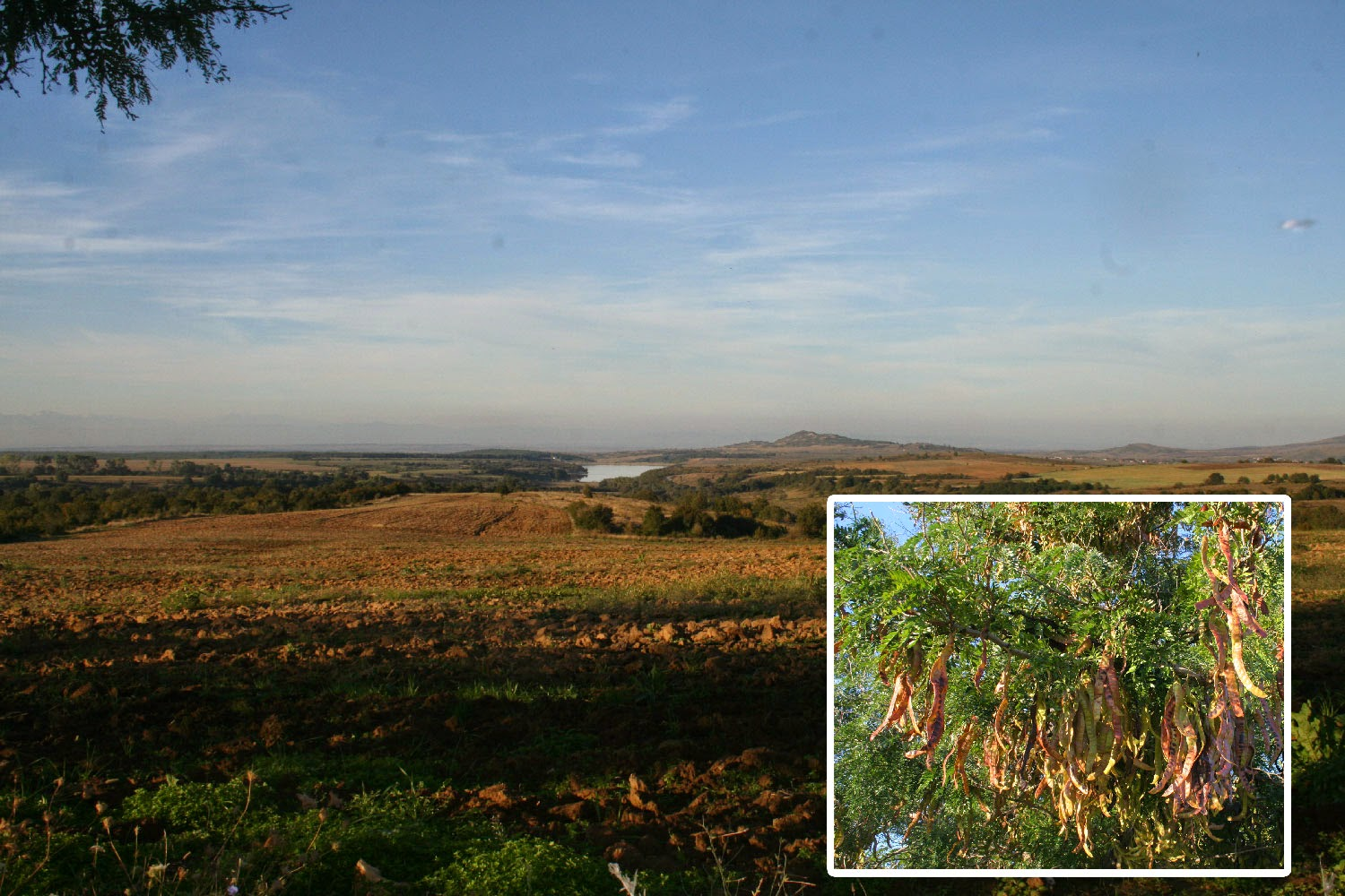 Views across the plain, and an unidentified tree
