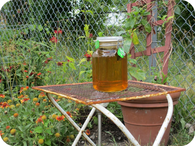 Sun tea in Detroit