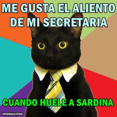 gato-empresario-aliento-secretaria