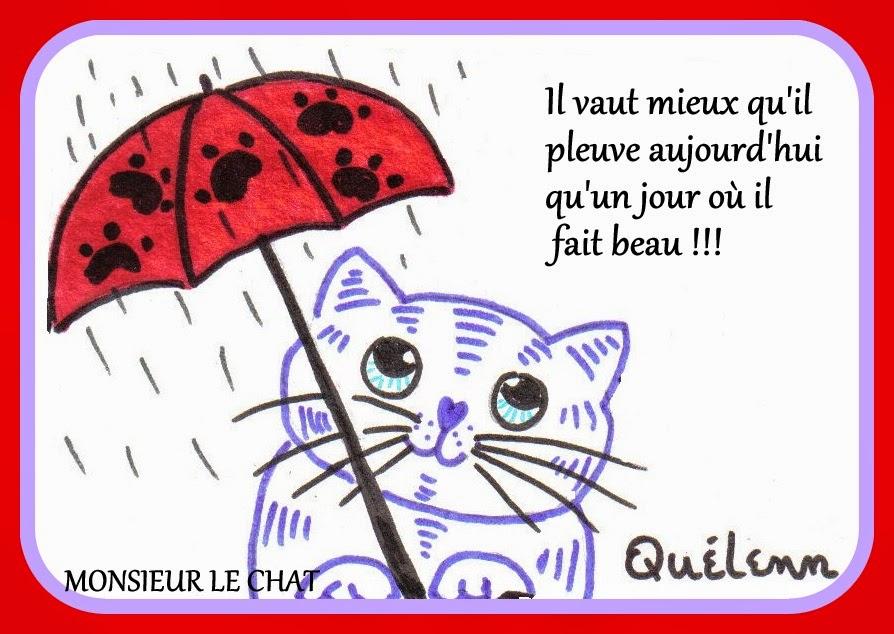 chat sous la pluie, humour,
