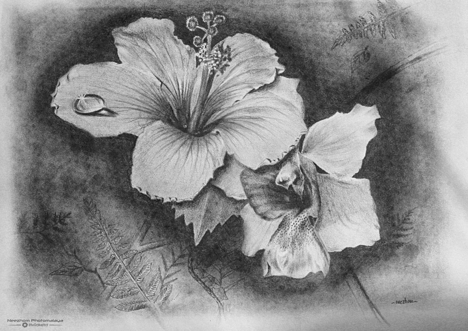 Hibiscus Rosa and Vanda Miss Joaquim flower Pencil Drawing