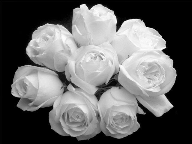 Love Images, White Flowers part 3