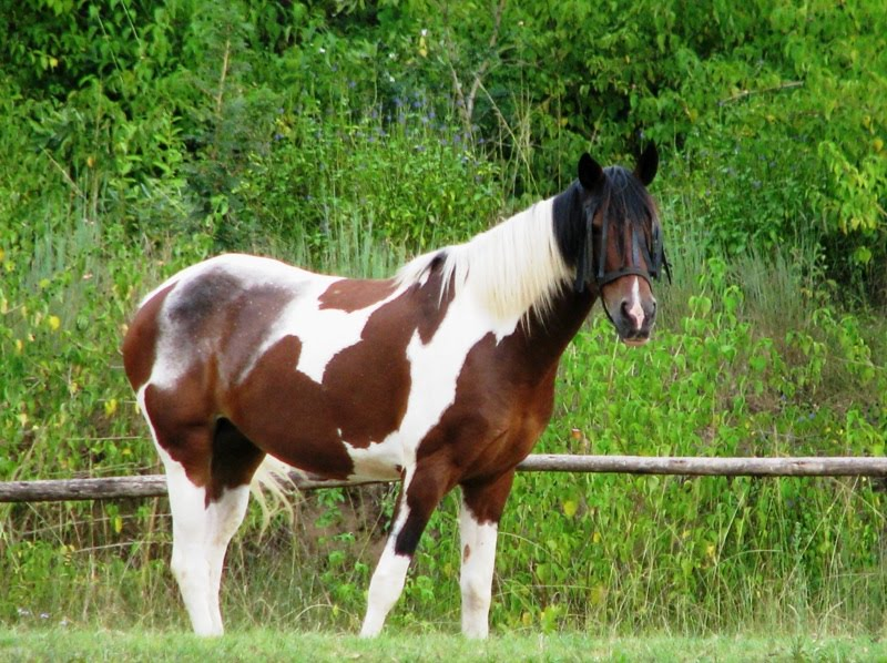 Ferrari Horse Breed Some Horse Breeds Are