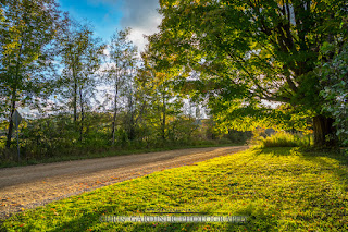 A fully green giant maple tree, viewed from the edge of the driveway a week and a half ago. This is a before photo of the fall foliage change. by chris gardiner photography www.cgardiner.ca
