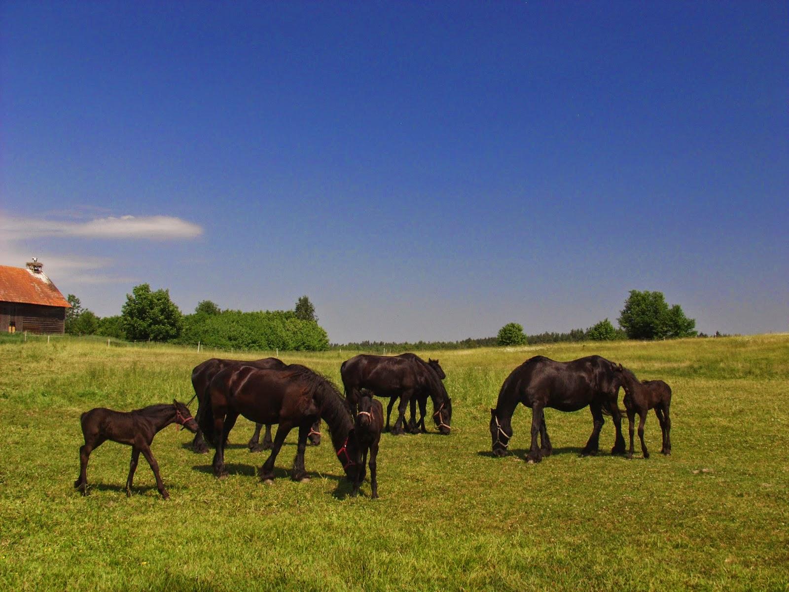 koń, konie, jazda konna, wypadek, wypadek z koniem, kopnięcie