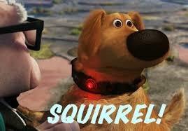 Squirrel Club!