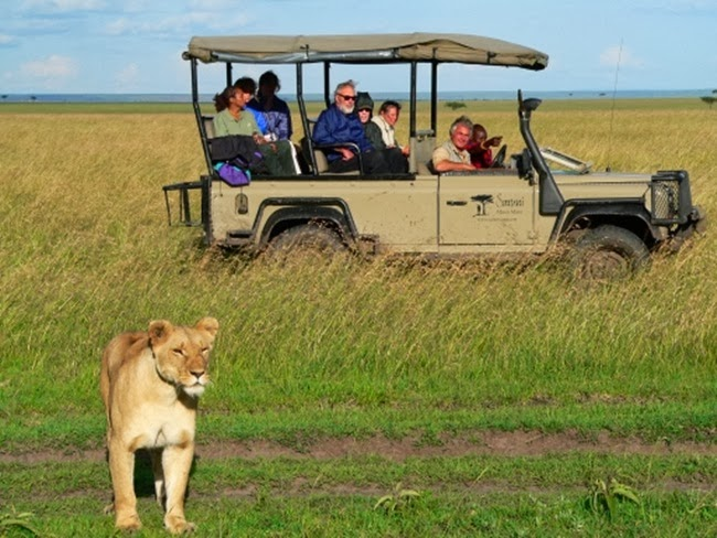 african animals  African safari  Kalahari  wildlife safari  african animals