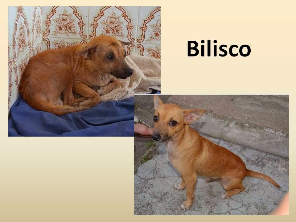 http://caesdejequie.blogspot.com.br/2013/08/este-e-bilisco-adote.html