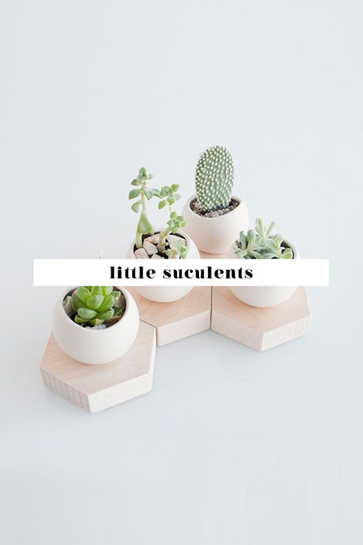 succulents home styling home inspo