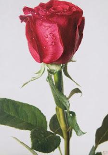 Rojas Flores en Oleos