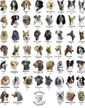 Jj puppies house popular dog breeds and smartest dog breeds for List of different house styles