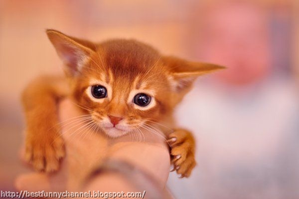 Funny red kitten.
