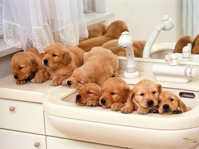 Puppies And Kitties Www Bilderbeste Com