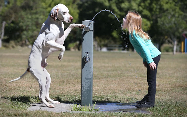 funny animal pictures, dog turns on faucet for little girl