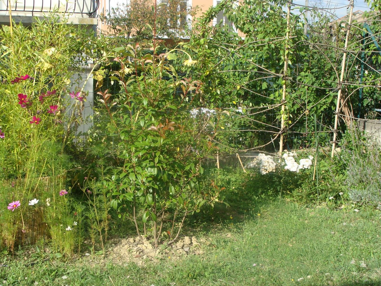 Jardine et ris retour vers le futur jardin for Vers du jardin
