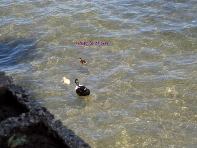 Bafa Gölü