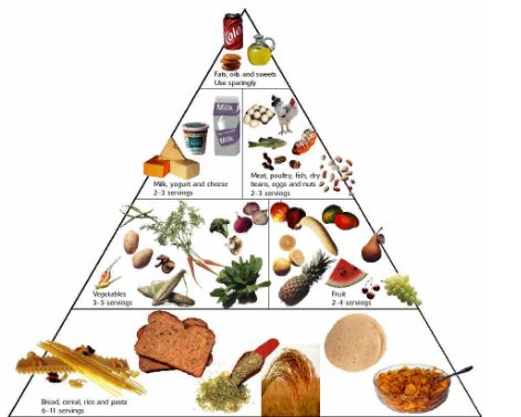 Fashions blog the food pyramid in spanish for Animation cuisine