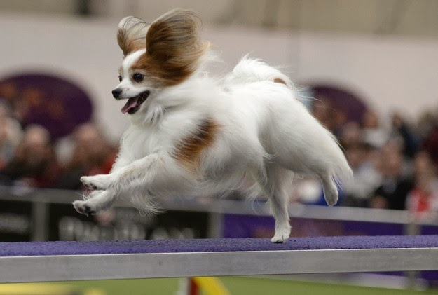 national dog show1