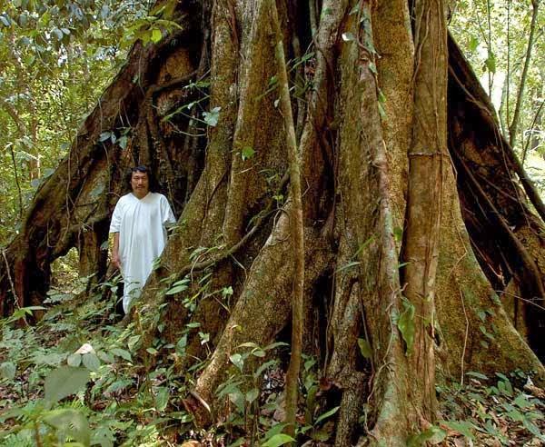 Lacandon Jungle Camping in The Lacandon Jungle
