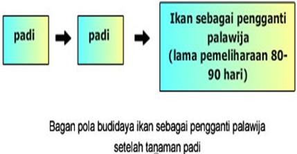 Aswar sharing budidaya ikan sistem mina padi pada umumnya pemeliharaan ikan sebagai palawija dilakukan setelah dua kali masa tanam padi berturut turut lama pemeliharaan biasanya berkisar antara 80 90 ccuart Choice Image