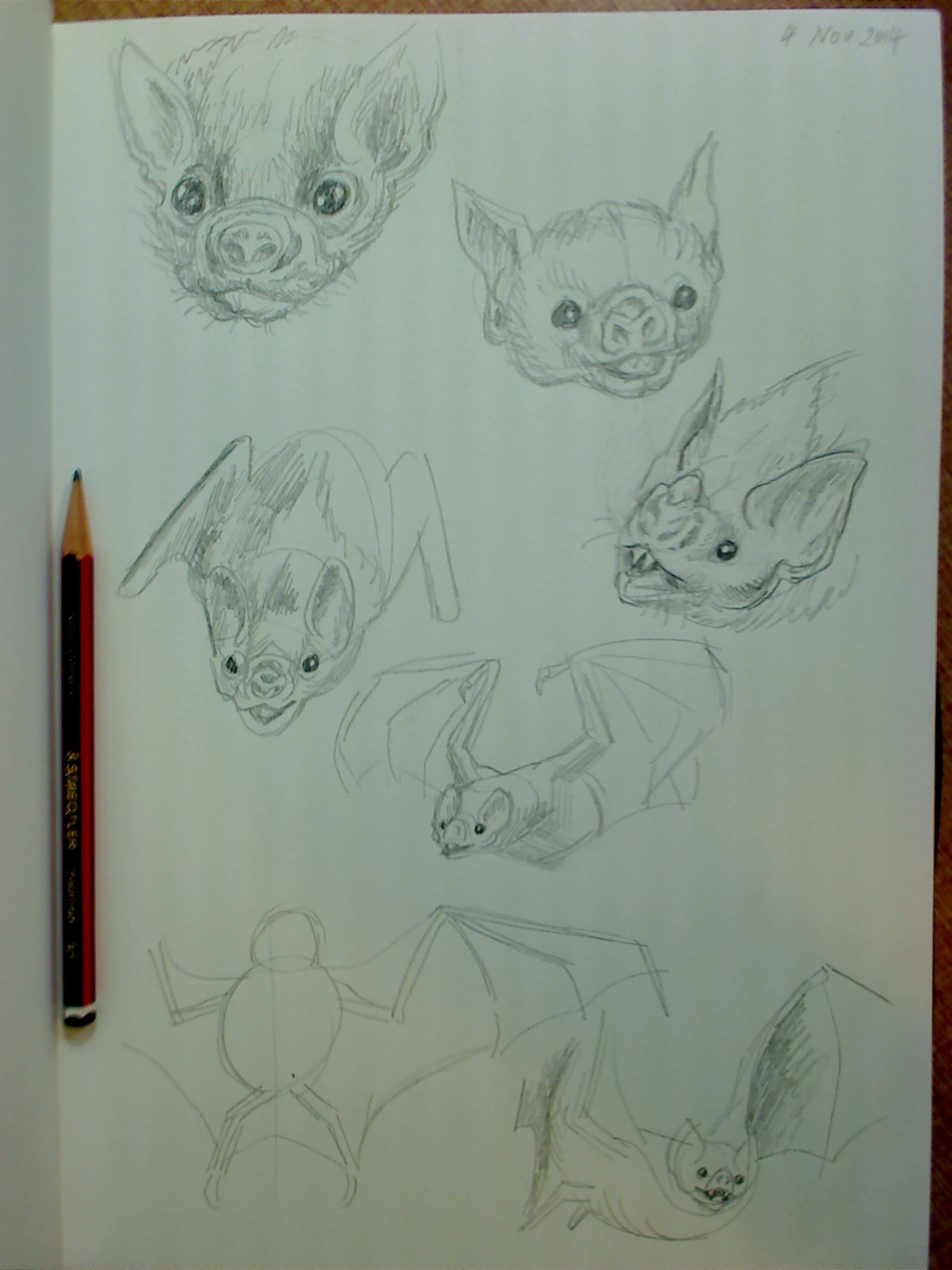 sketchbook drawings of vampire bats