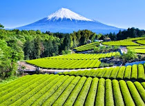 The Original Home Of Japanese Green Tea