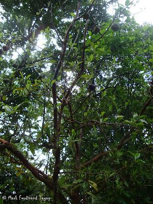 Singapore Botanic Gardens Photo 12