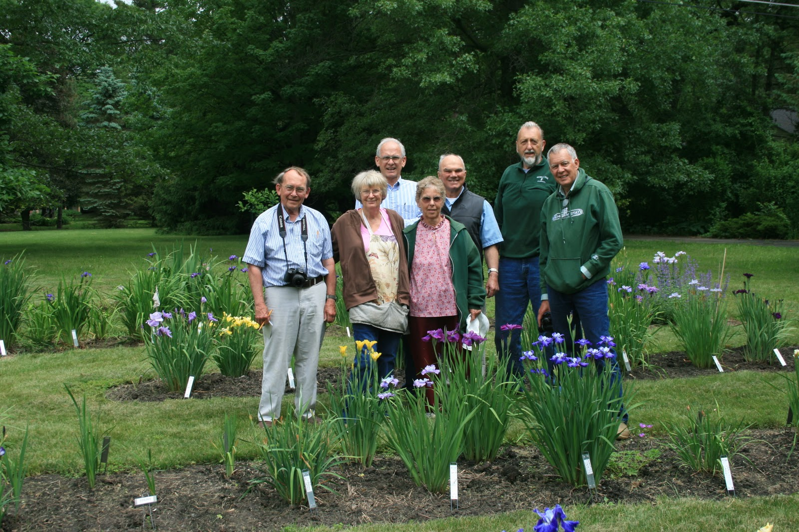 how to grow spurrier irises