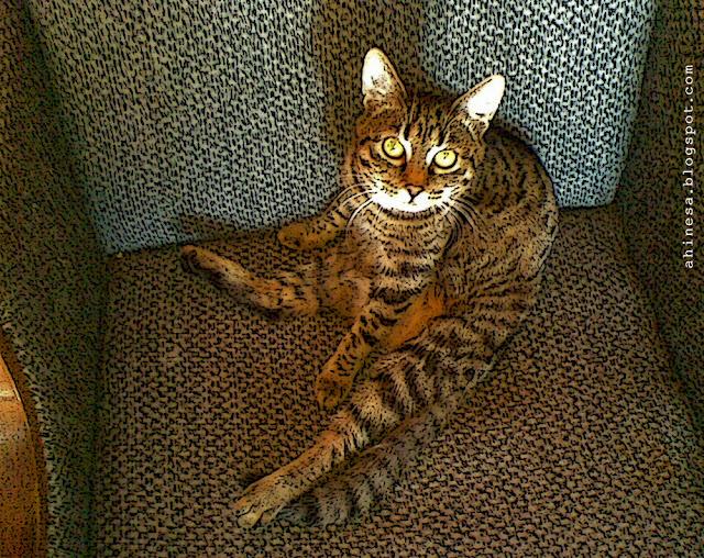 моя кошка, кошка, кошка в кресле, зоосалон