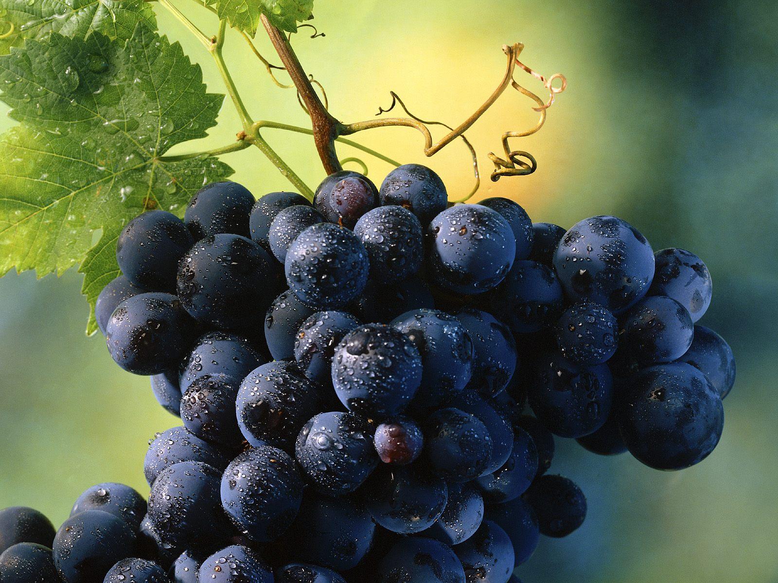 Урожай винограда в Украине в 2014 г. сохранится на уровне прошлого года