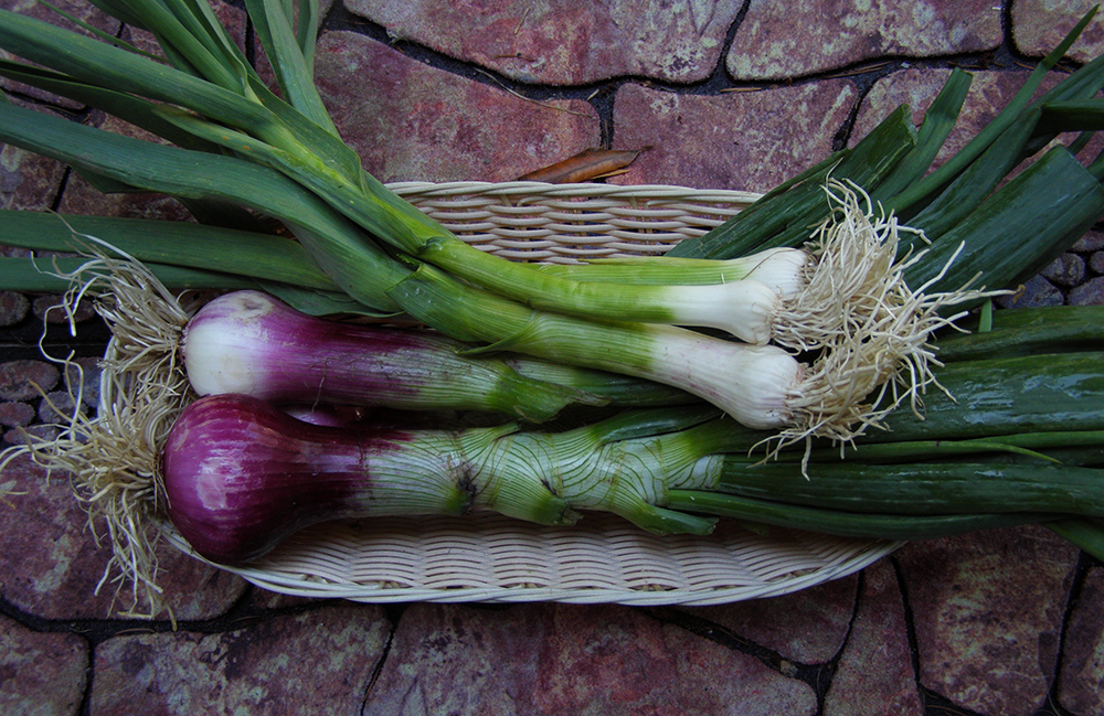 Basket of Spring Onions and Green Garlic