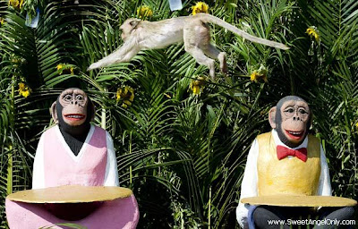 funny_picture_funny_monkeys_sitting_vandanasanju.blogspot.com