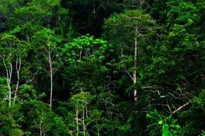Ekosistem hutan termasuk ekosistem alam