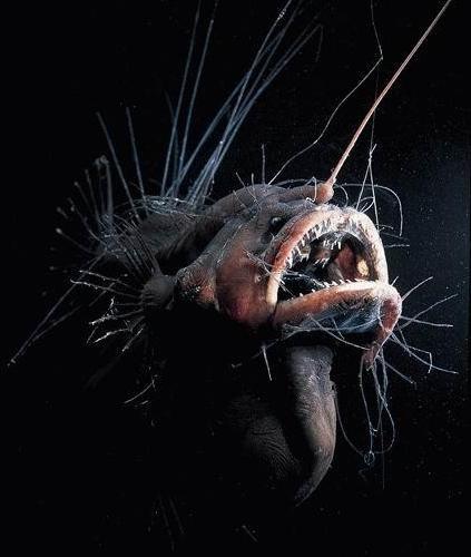 Weird Deep Sea Creatures (60 Images) - 27.2KB