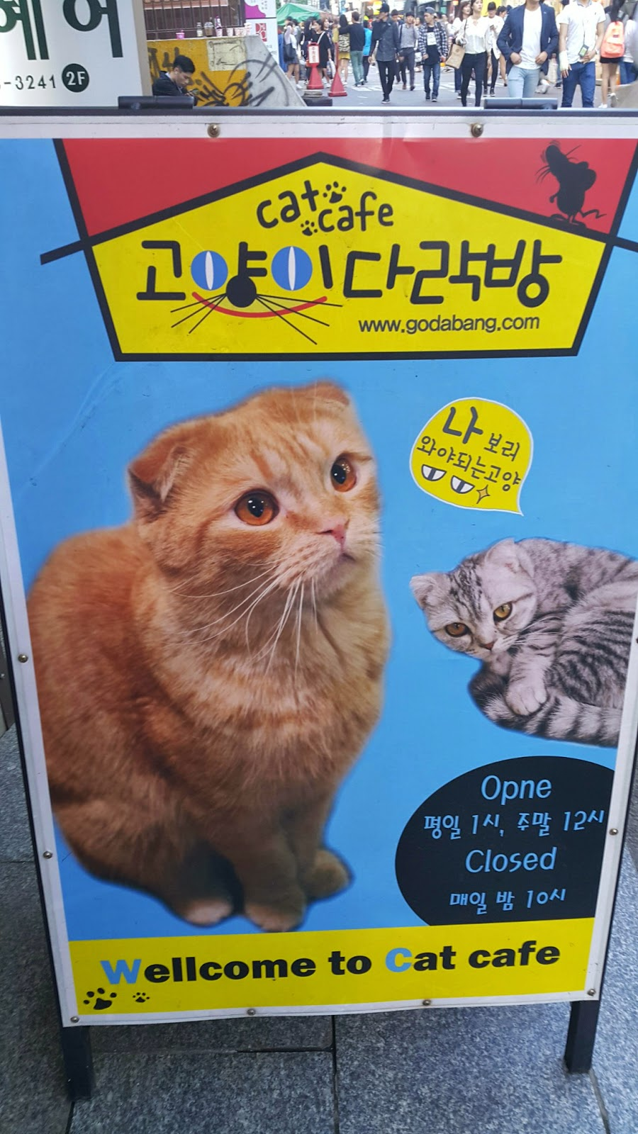 cat cafe in Seoul