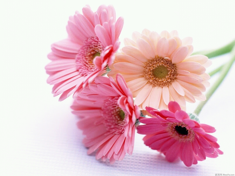 Flowers For Flower Lovers.: Beautiful Flowers Wallpapers