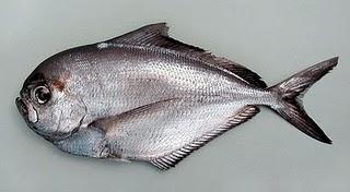 poisson tilapia
