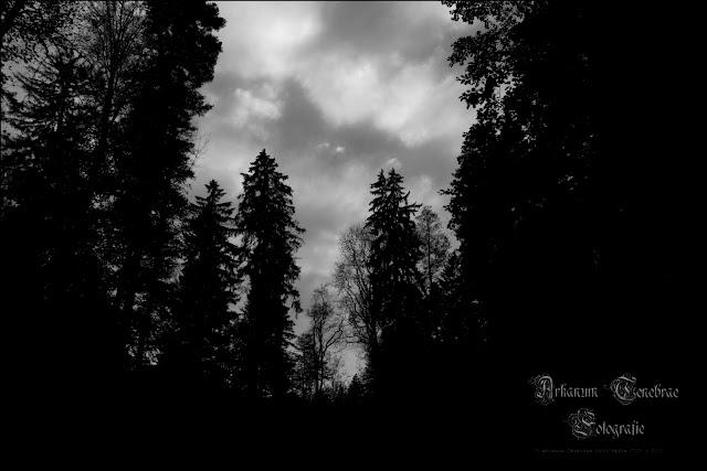Im Wieslauftal Wald